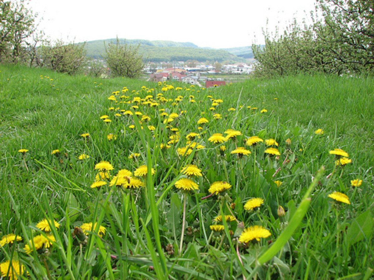 Spring in Bistrita (Photo courtesy by bortescgristian from Flickr.com)