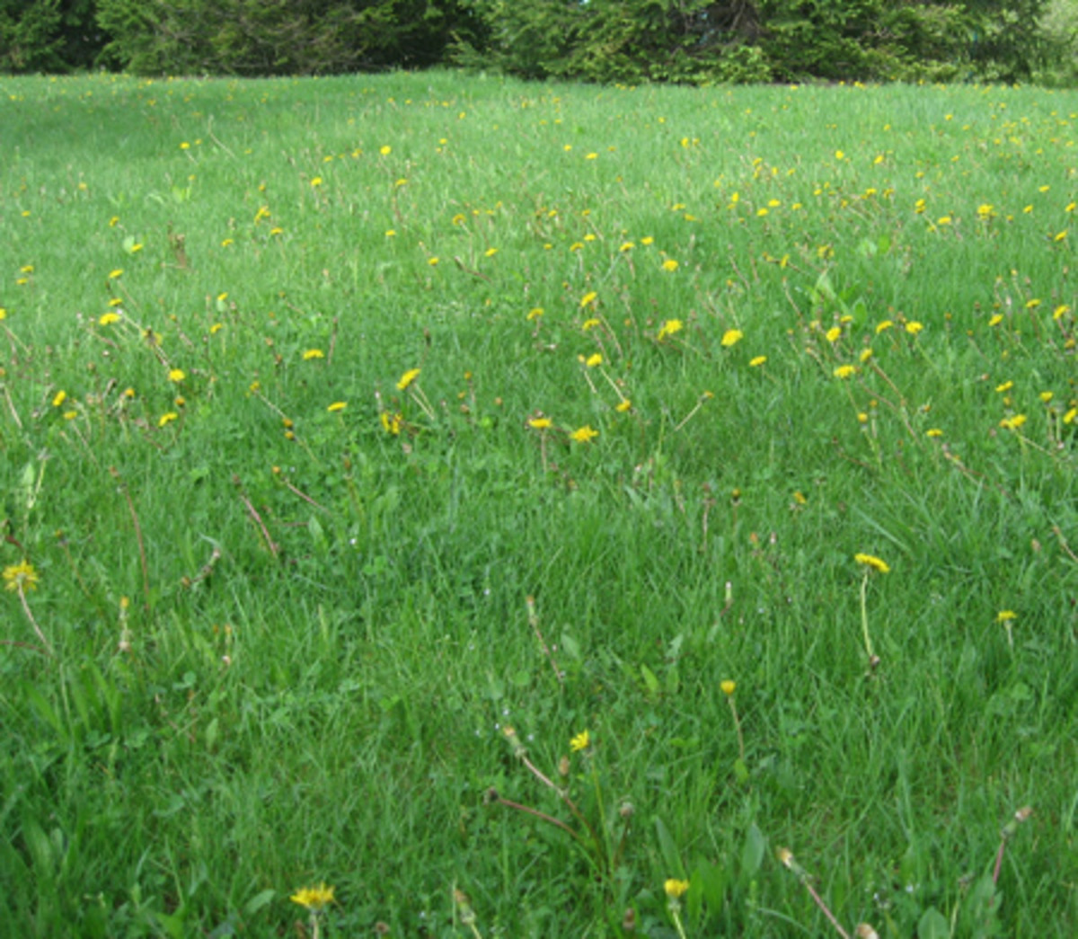 Freedom Lawn in Pennsylvania (Photo courtesy by Sustainable Gardener from Flickr.com)