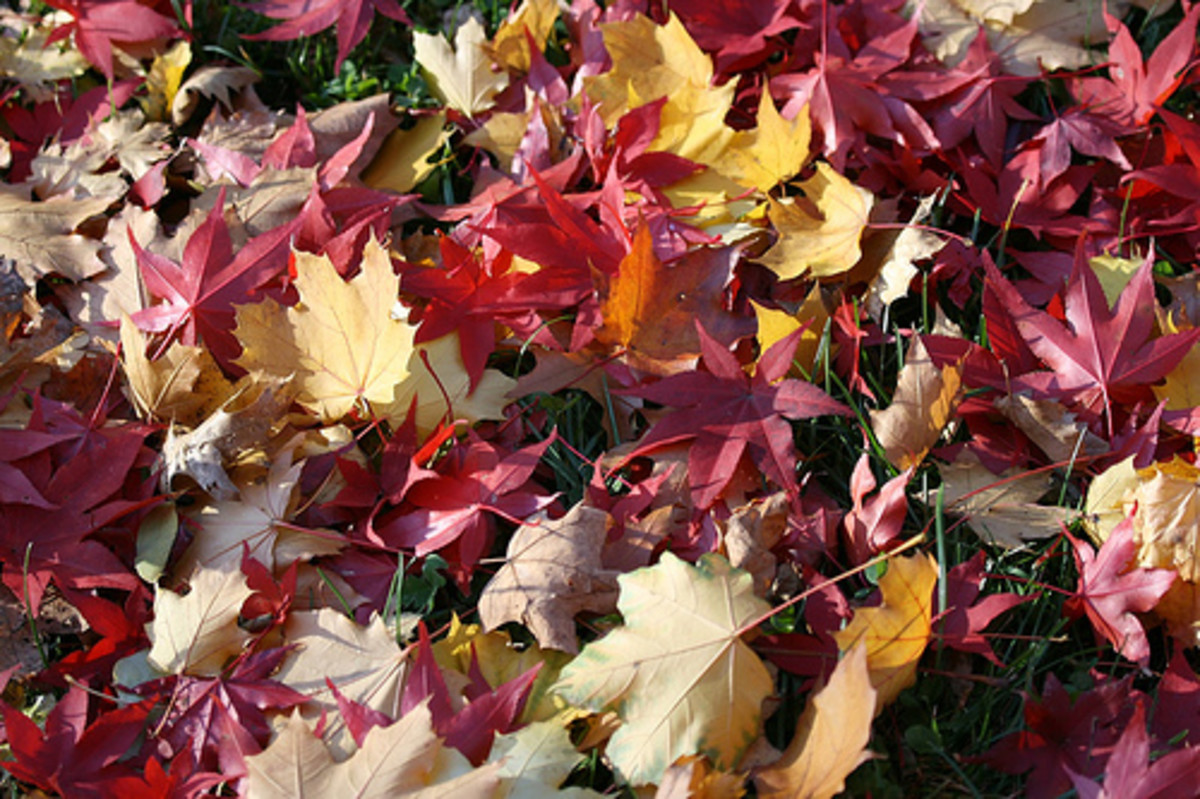 Colorful Leaves on the Lawn (Photo courtesy by Marco Arment from Flickr.com)