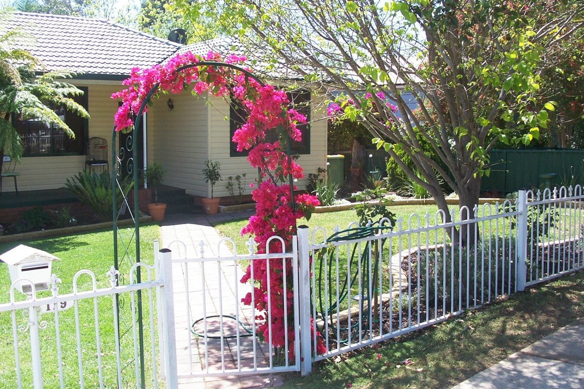 Bougainvillea is a versatile plant that can be trimmed.