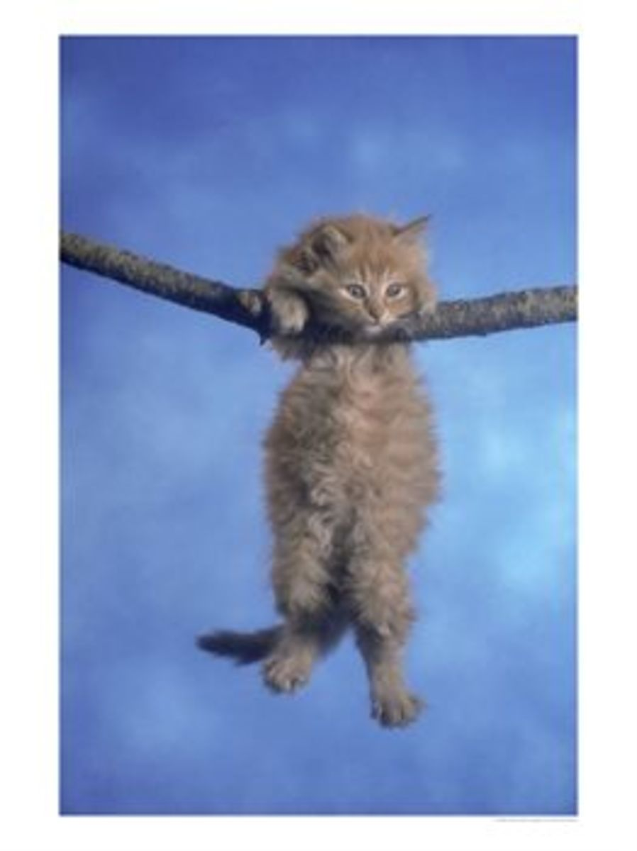 The timeless blue backdrop, a palpable fear in the kitten's eyes, a sturdy branch... yes, this is the work of a grand master.