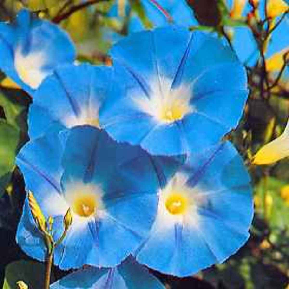 Morning glory seeds have been used to divine spiritual hallucinations for centuries.