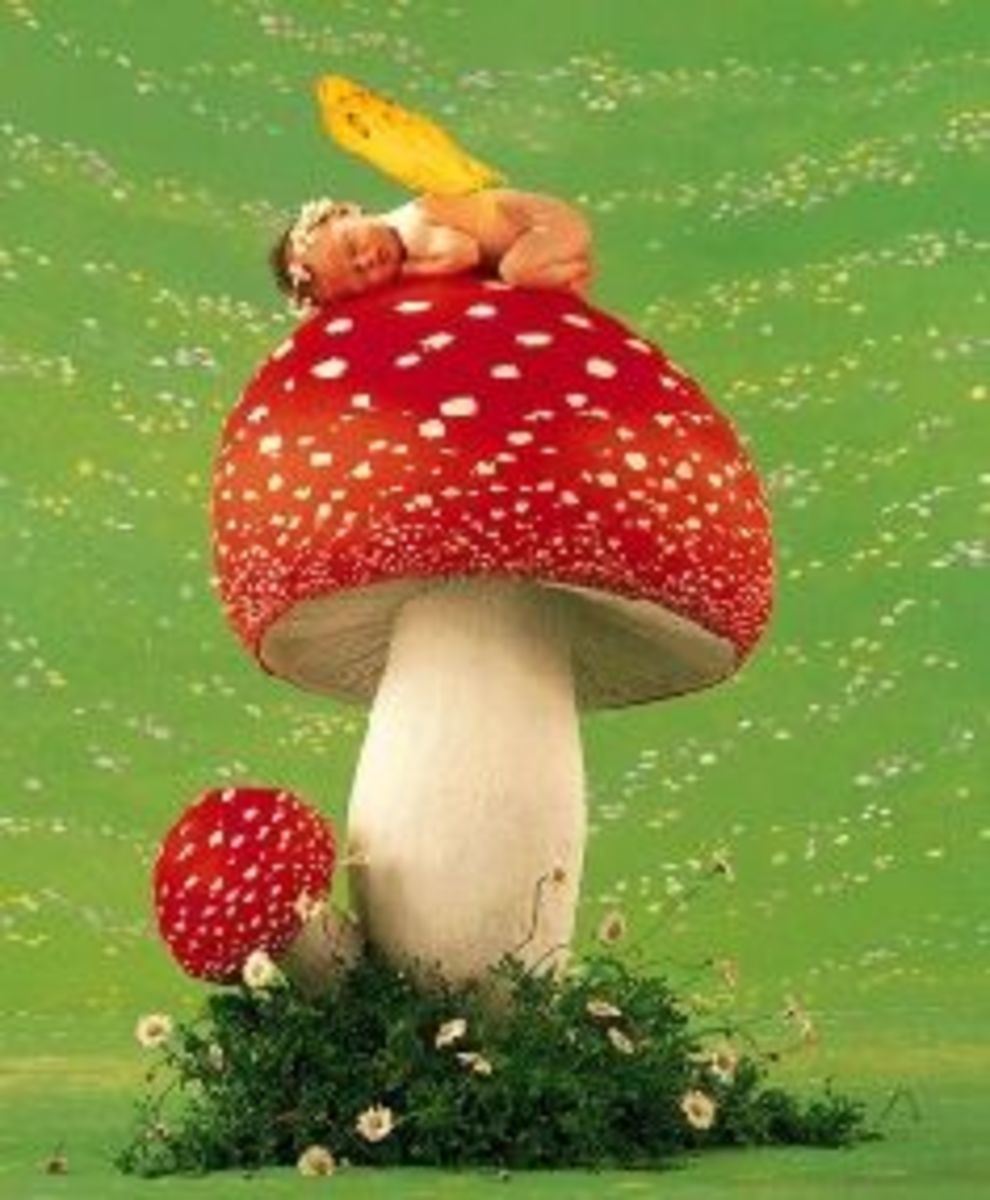 Fairy baby sleeping on a Fly Agaric mushroom.