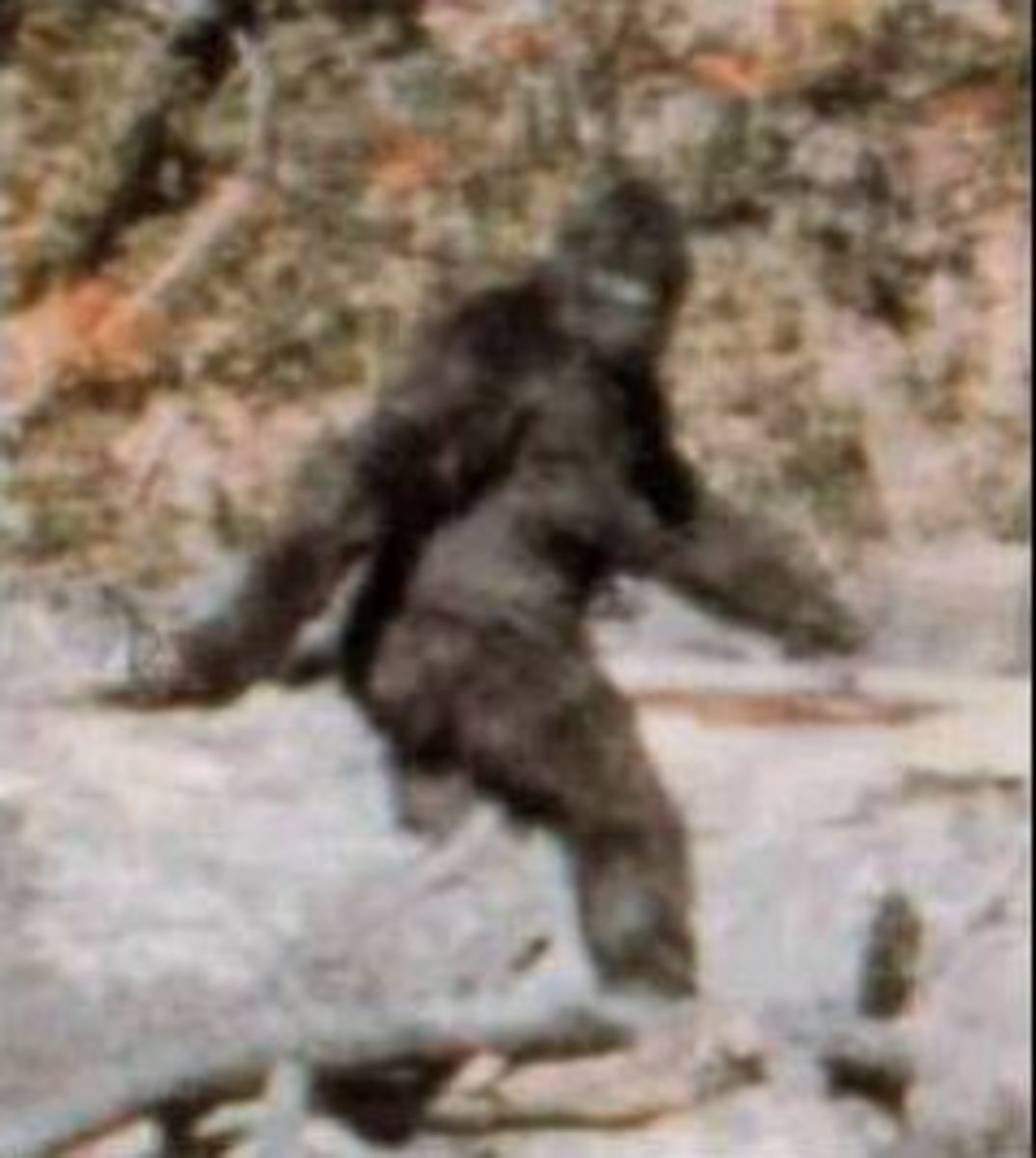 "Frame 352 from the Patterson-Gimlin film disputed evidence of ""bigfoot"""