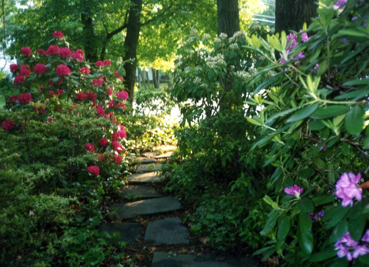To add color to a shade or woodland garden grow colorful shrubs like azaleas, rhododendrons, and mountain laurel. Add interesting foliage from woodland favorites, like pulmonaria or caladium.