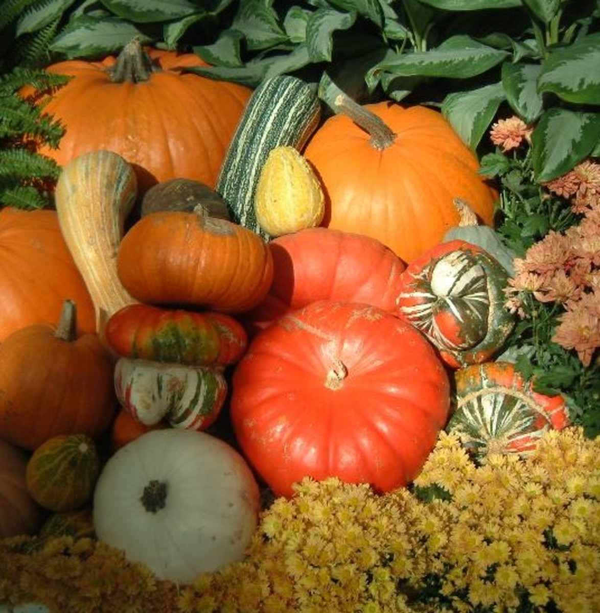 The different squashes, both edible and decorative, are favorites at this time of year.