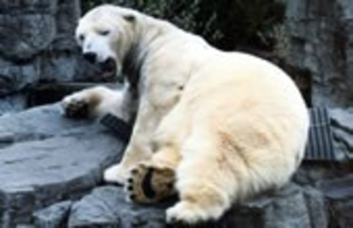 Visit the polar bears at the Central Park Zoo
