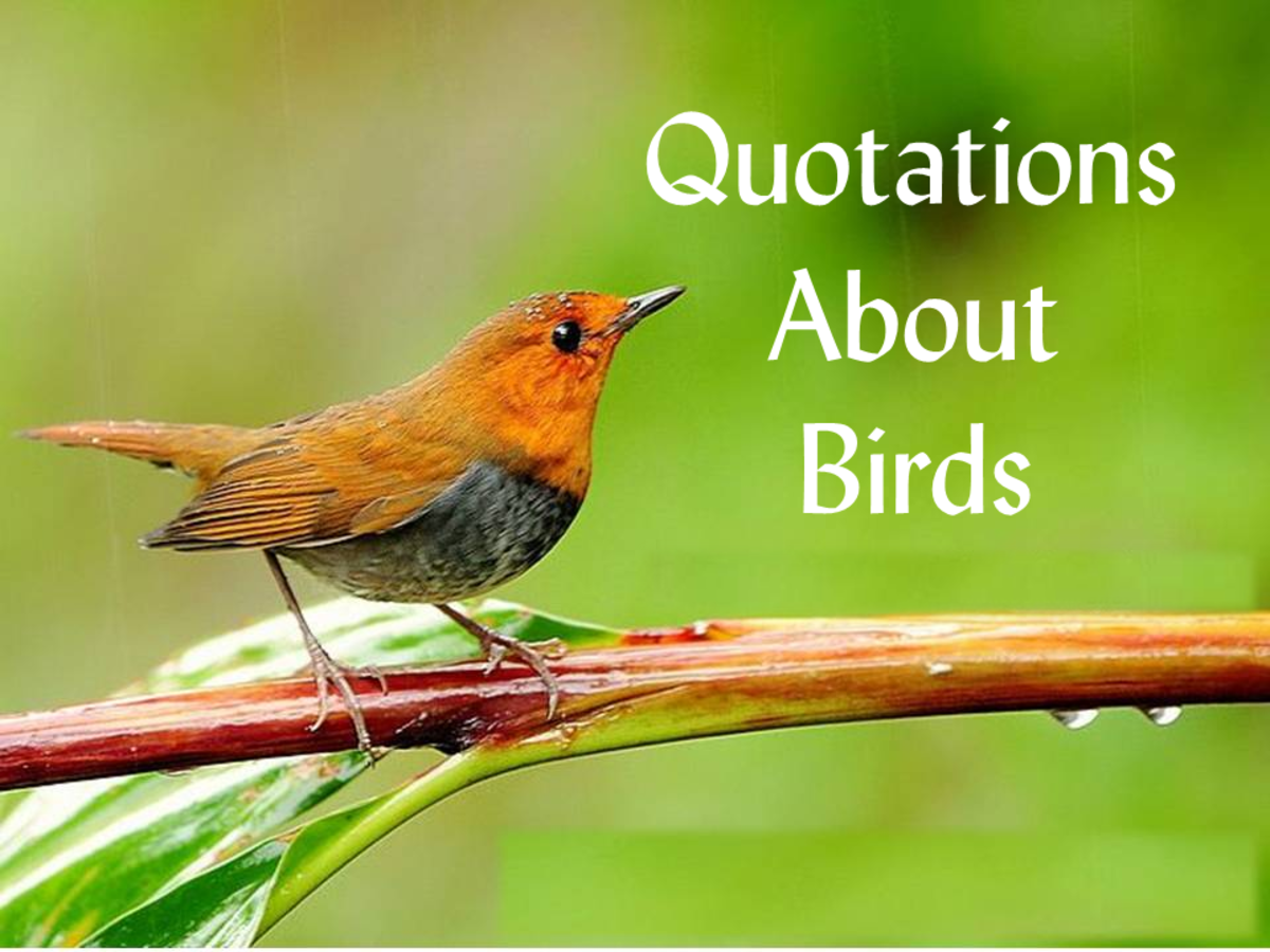 Inspirational Quotes About Birds Hubpages