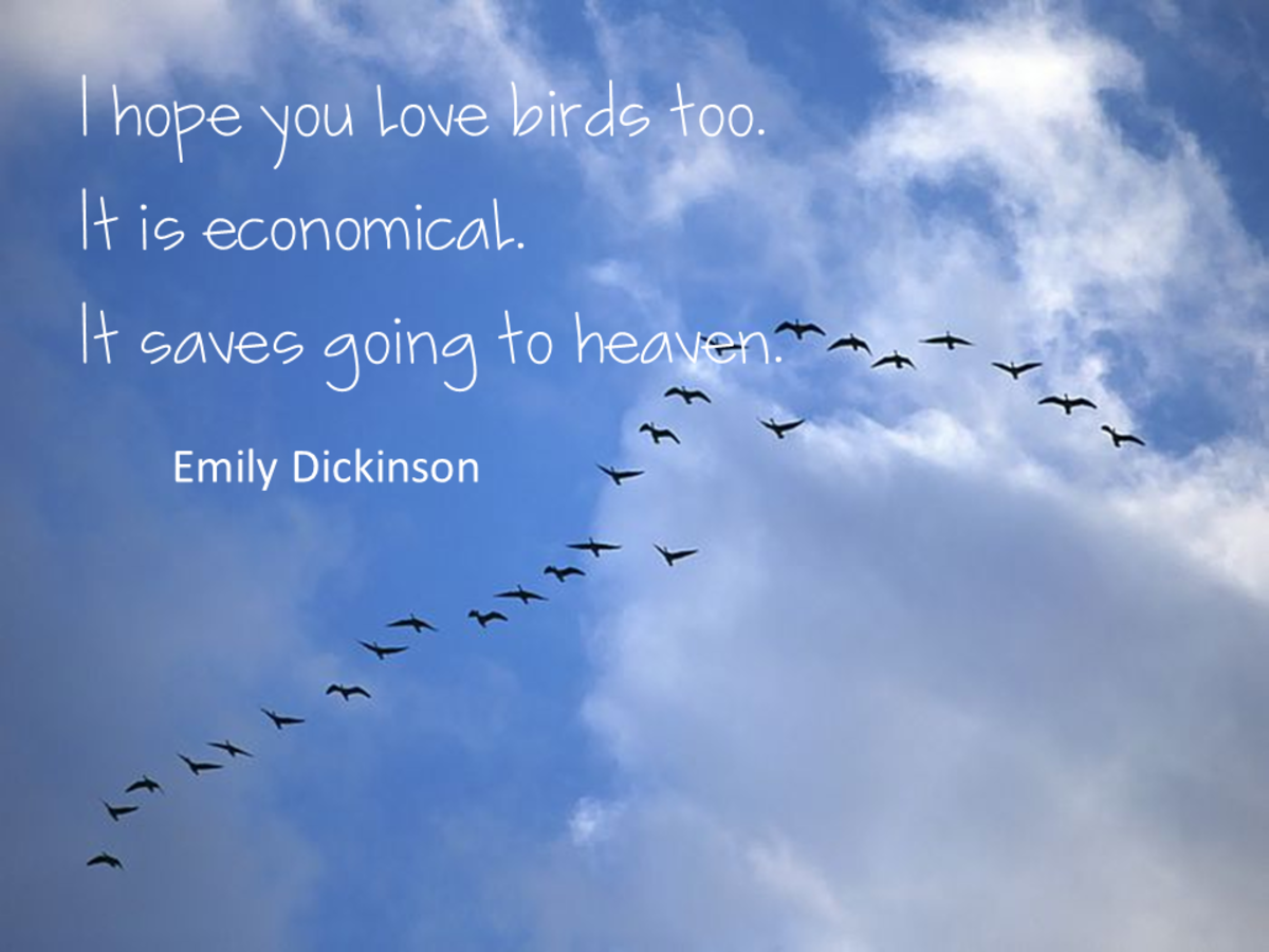 quotations_about_birds_