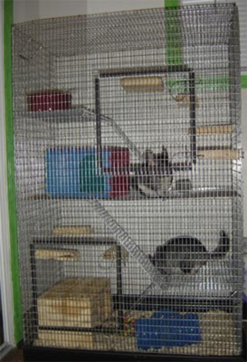After chewing the platic pieces off their first cage, I had to upgrade to a Martin's Cage, that is all wire.