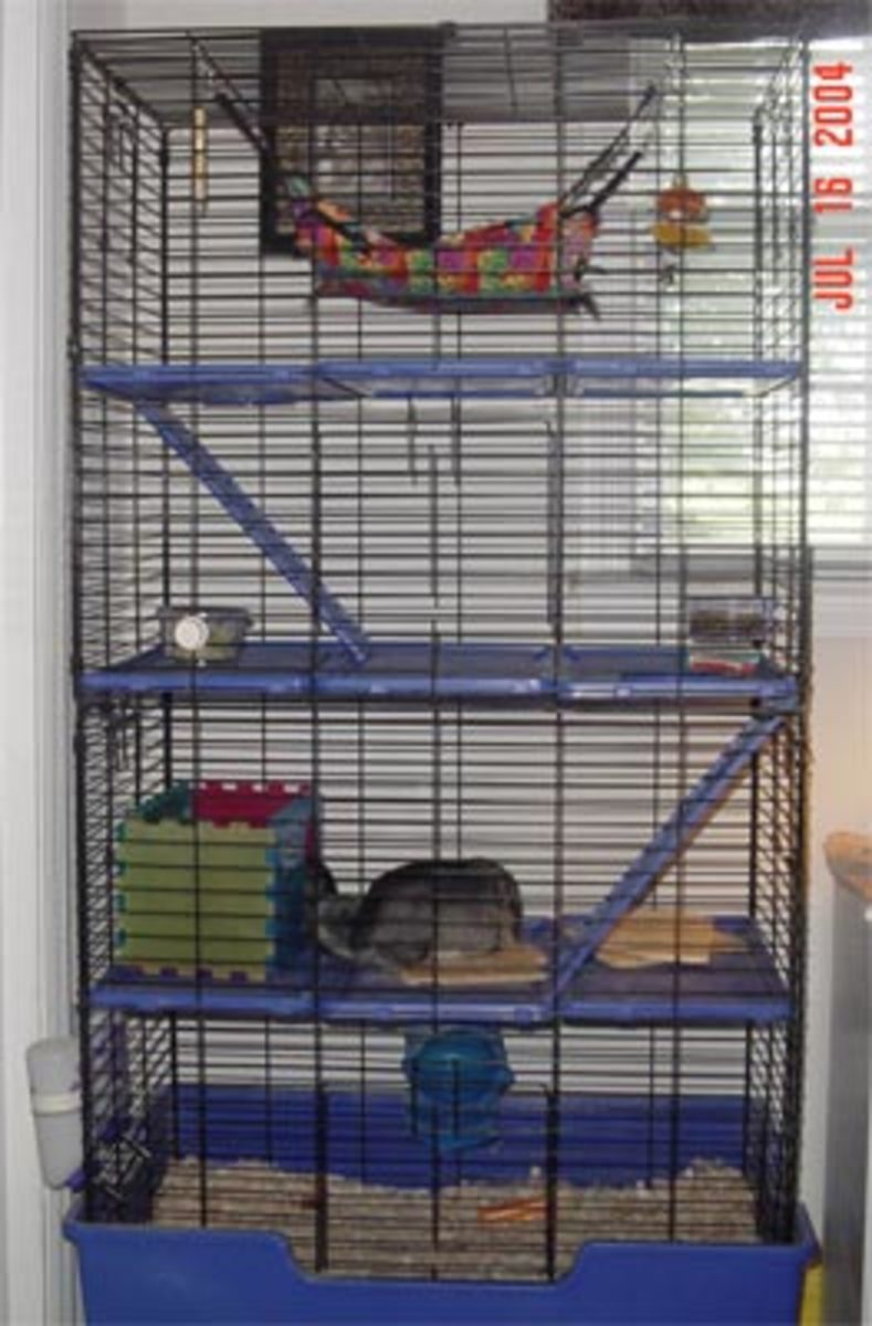 My first upgraded chinchilla cage. It's a Ferret cage. Cages with plastic ledges and parts should be used with caution.