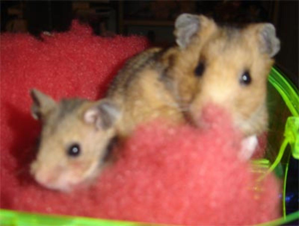 Rocky and Roxy. Rocky died '06. Roxy died 08.27.07