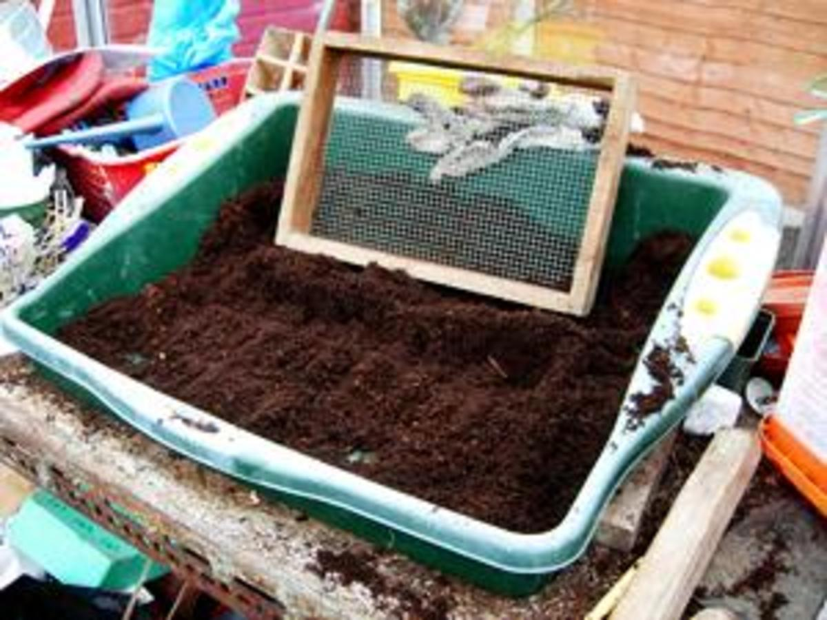 Seed sowing station.  All photos are not necessarily of the vegetable described but they illustrate the principles.