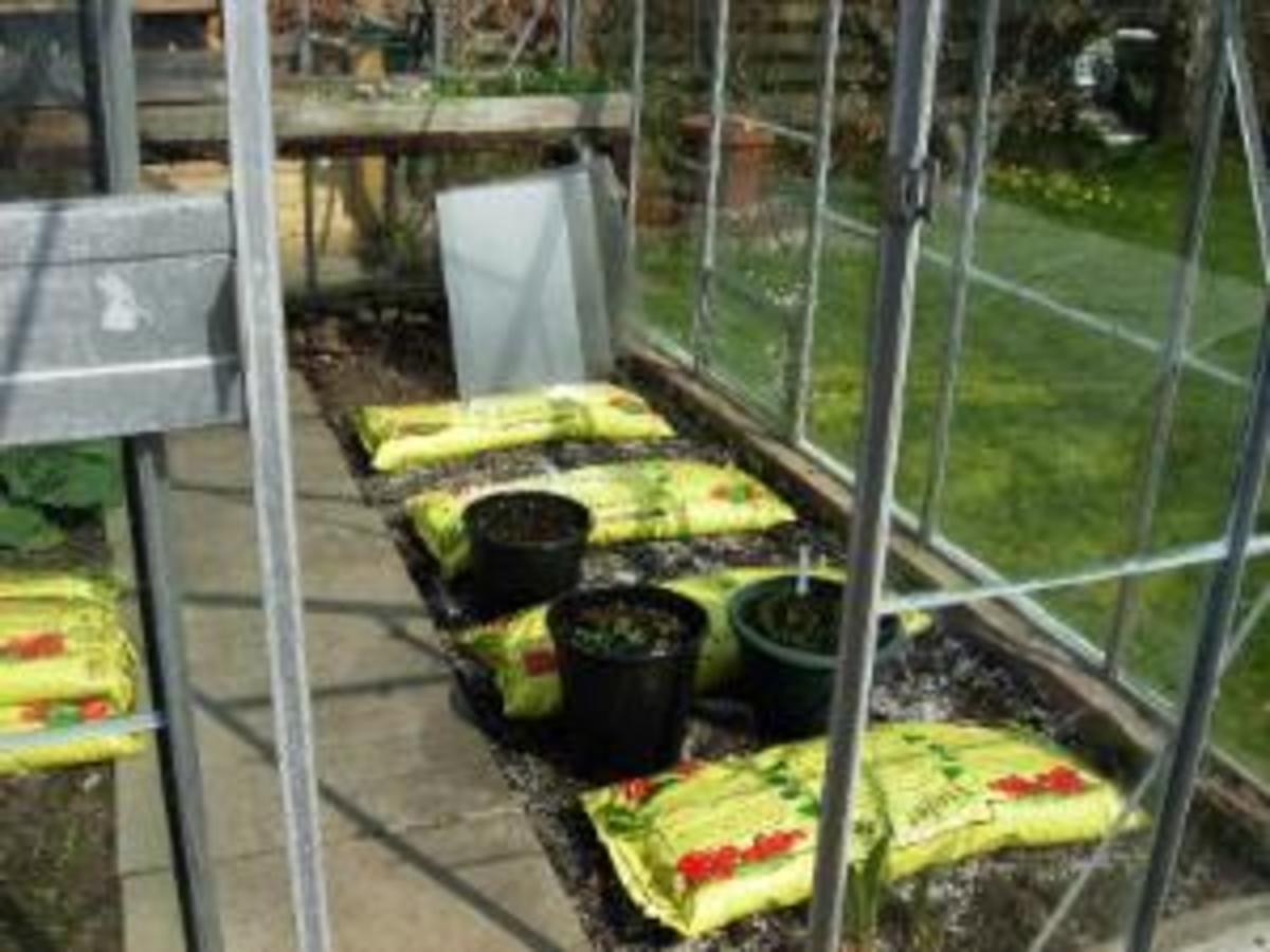 Growing bags ready for planting up with tomatoes.