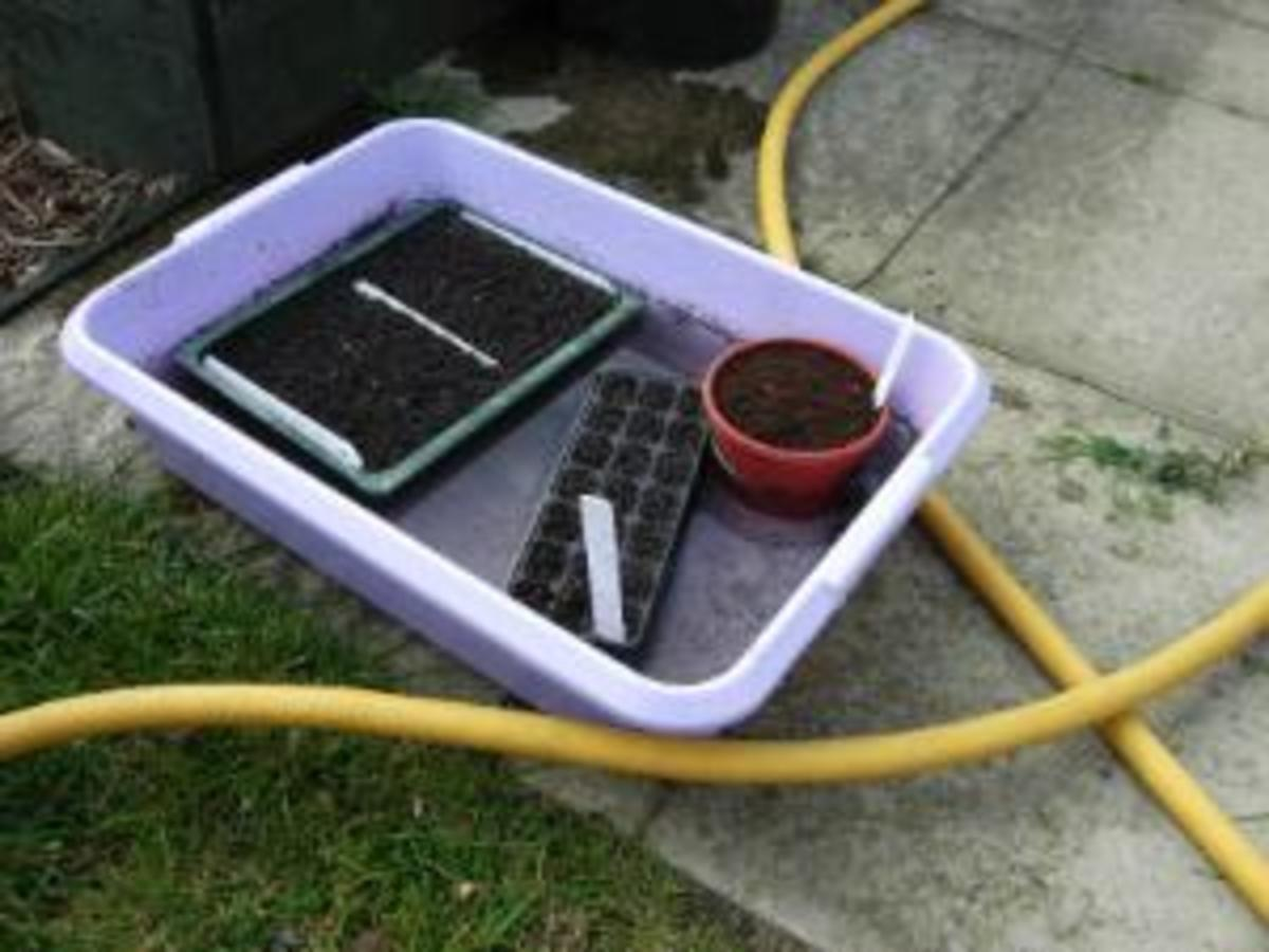 The Best way to water so as not to wash out seeds - water rises up from bottom.