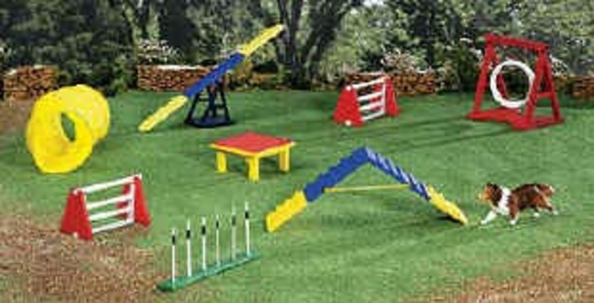 Dog Agility Equipment and Obstacles