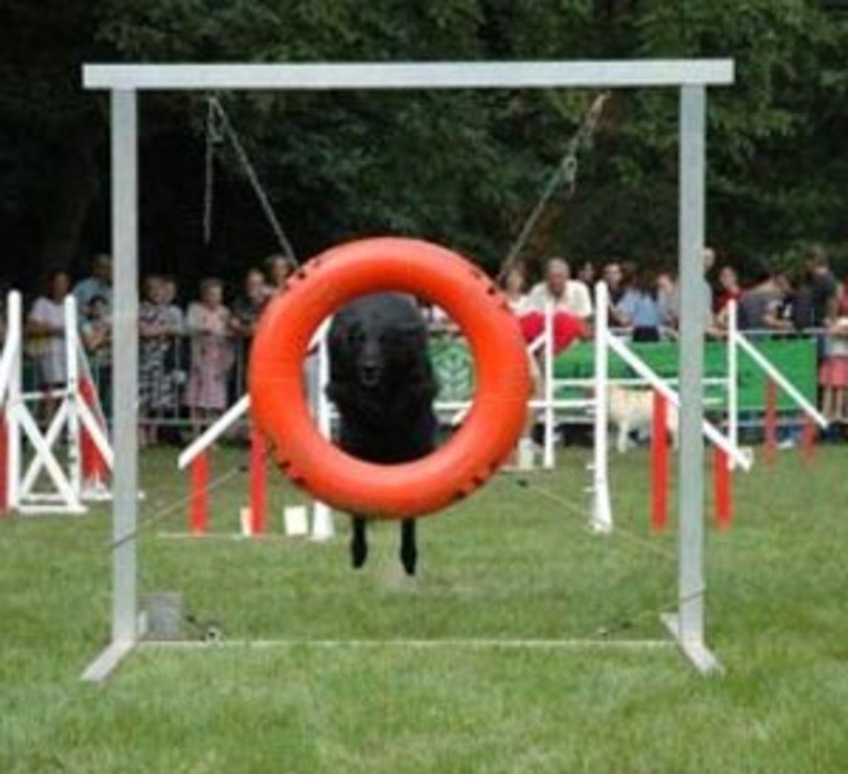 Tire/Hoop Jump