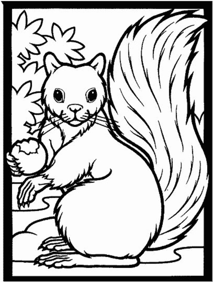 Squirrels like vegetables, too!
