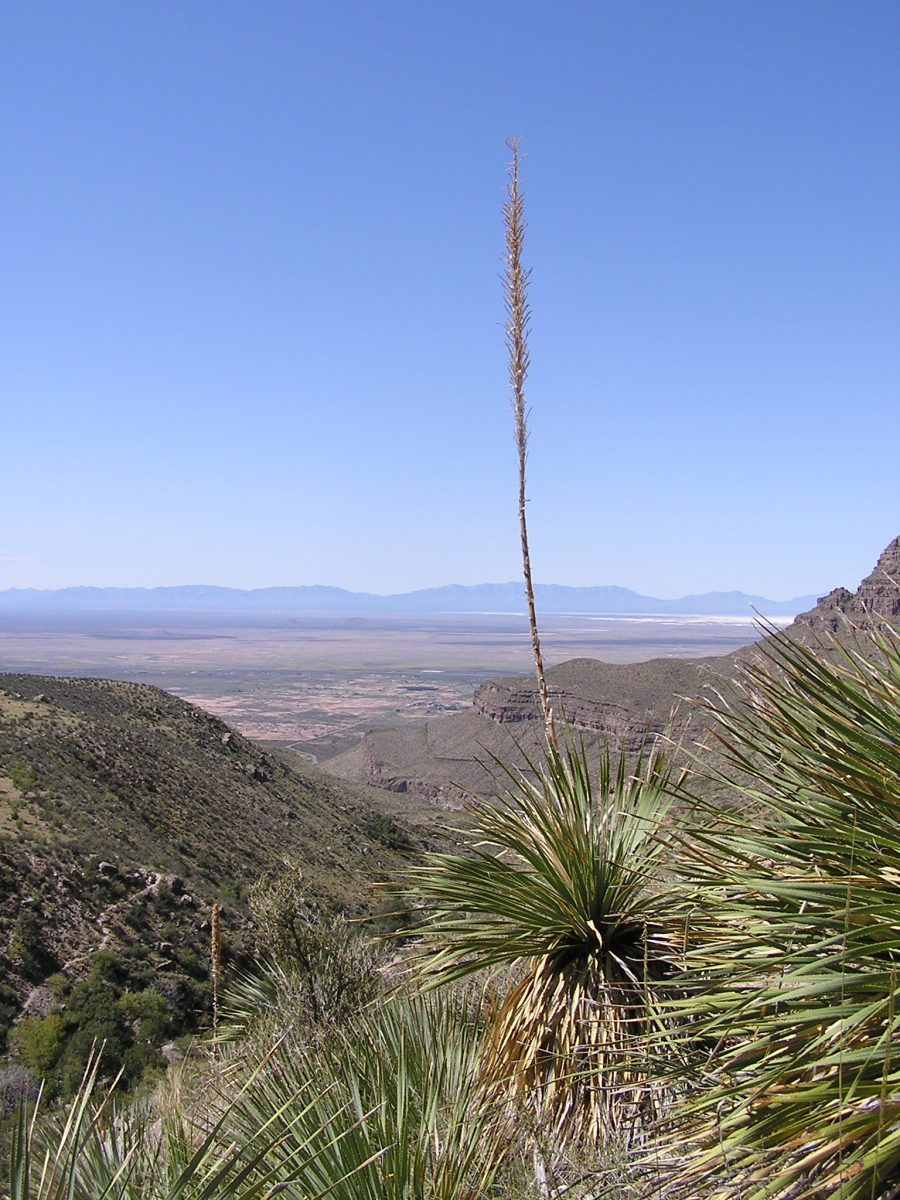 Dog Canyon, New Mexico