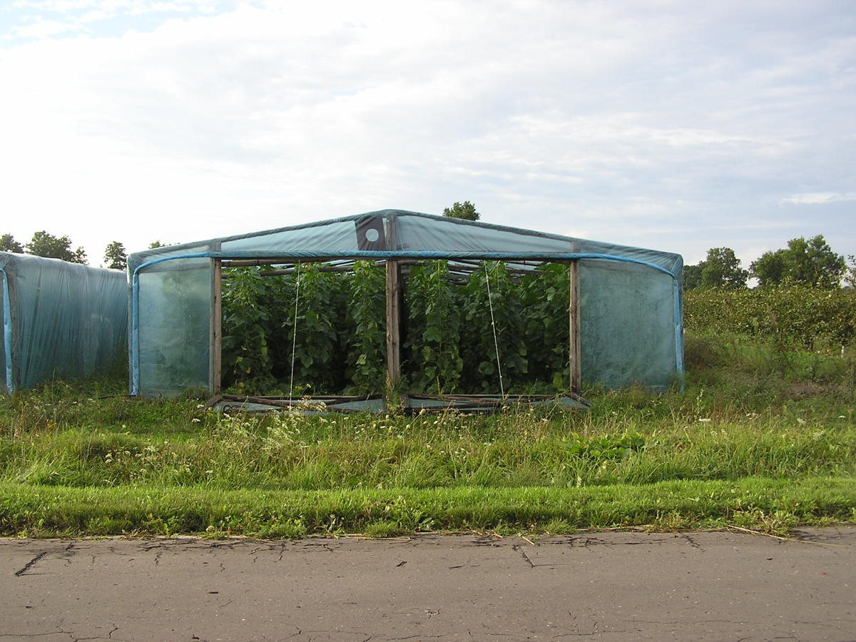 You can build you own homemade greenhouse