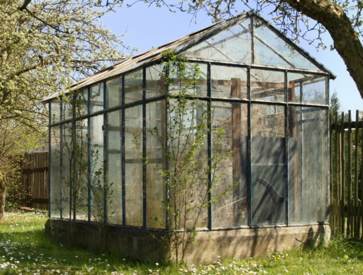 Tips and Tricks on Greenhouse Gardening