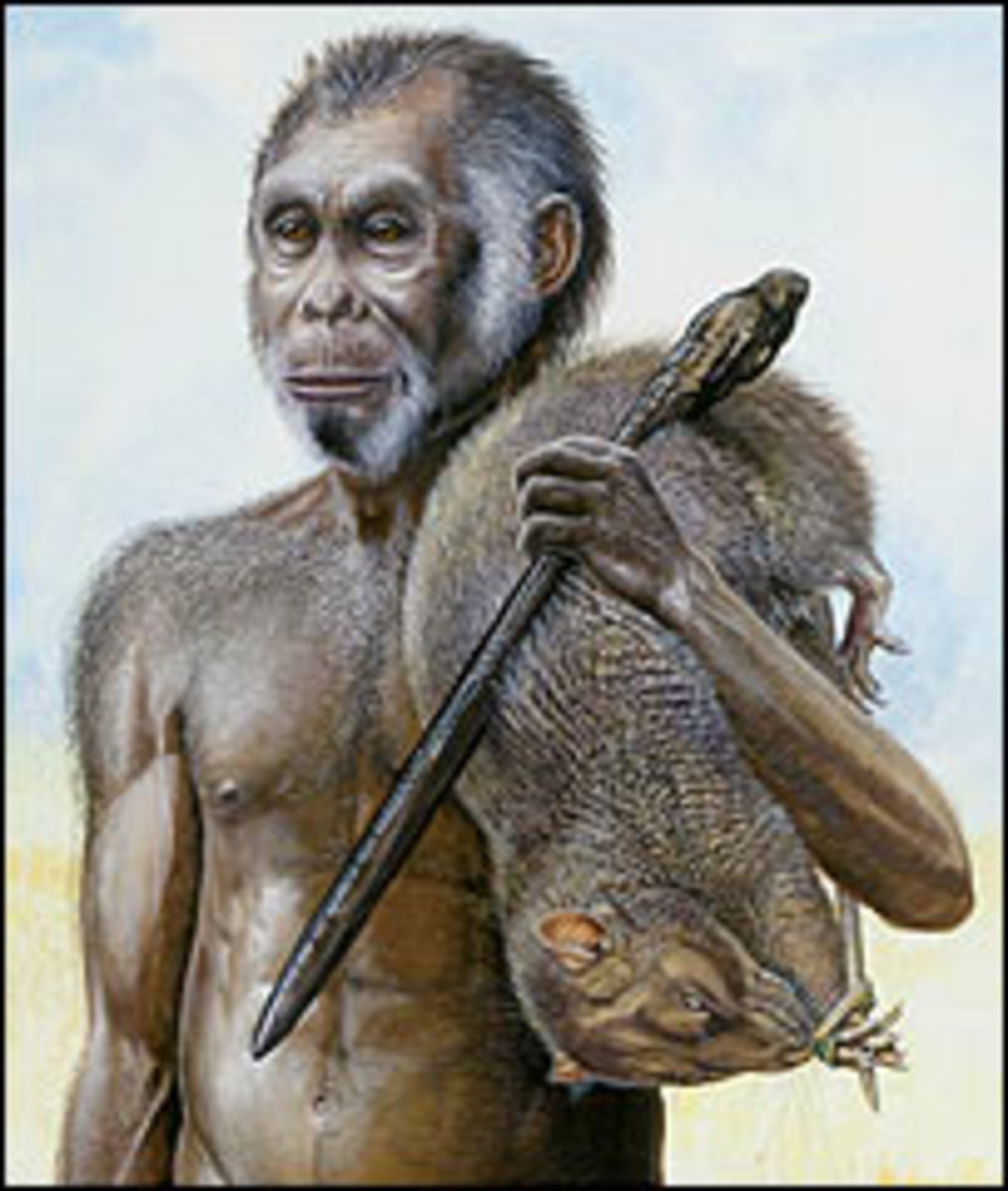 Artist's rendition of a male Homo floresiensis.
