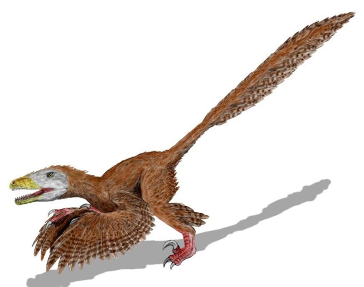 Artist's rendition of proto-bird dinosaur.