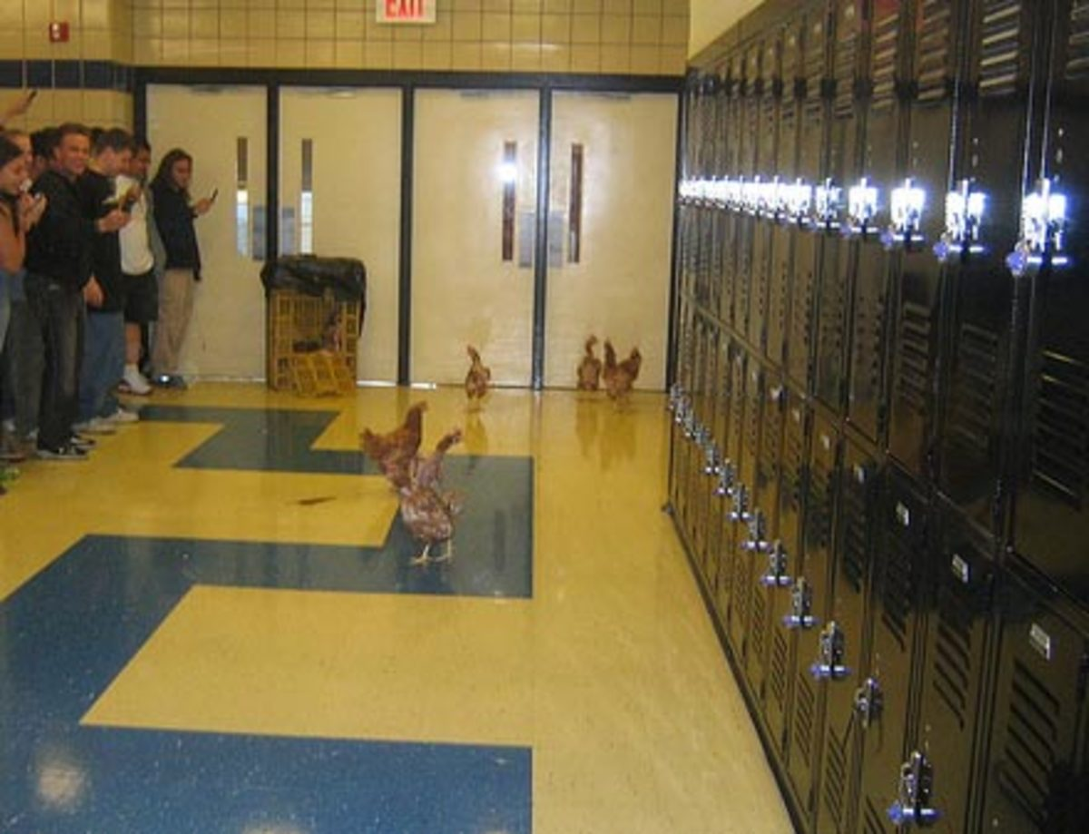 Let chickens loose in the hallways.