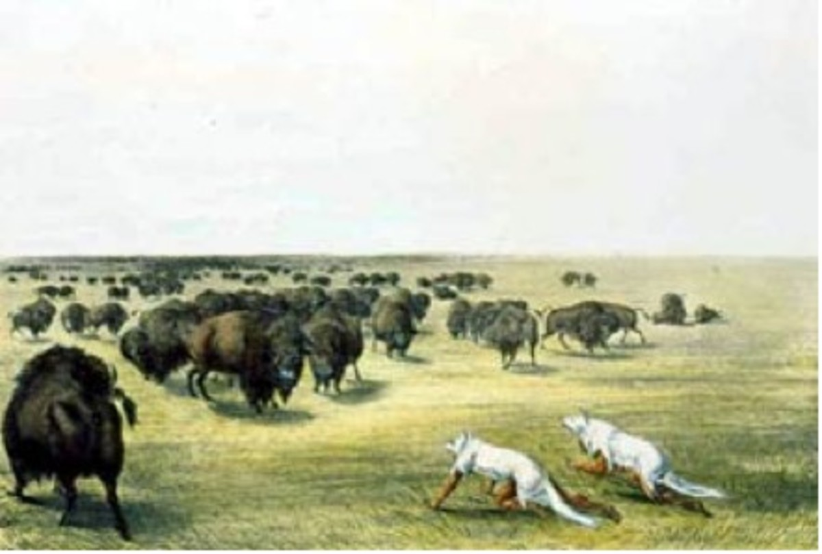 "Figure 2. ""Buffalo Hunt under the Wolf-skin Mask."""