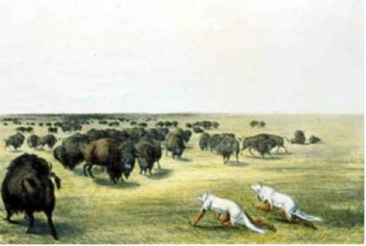 "Figure 2. ""Buffalo Hunt under the Wolf-skin Mask."""
