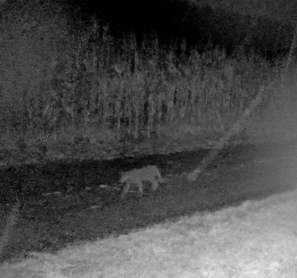 It was a dark and rainy night when Gail's trail camera caught this image.