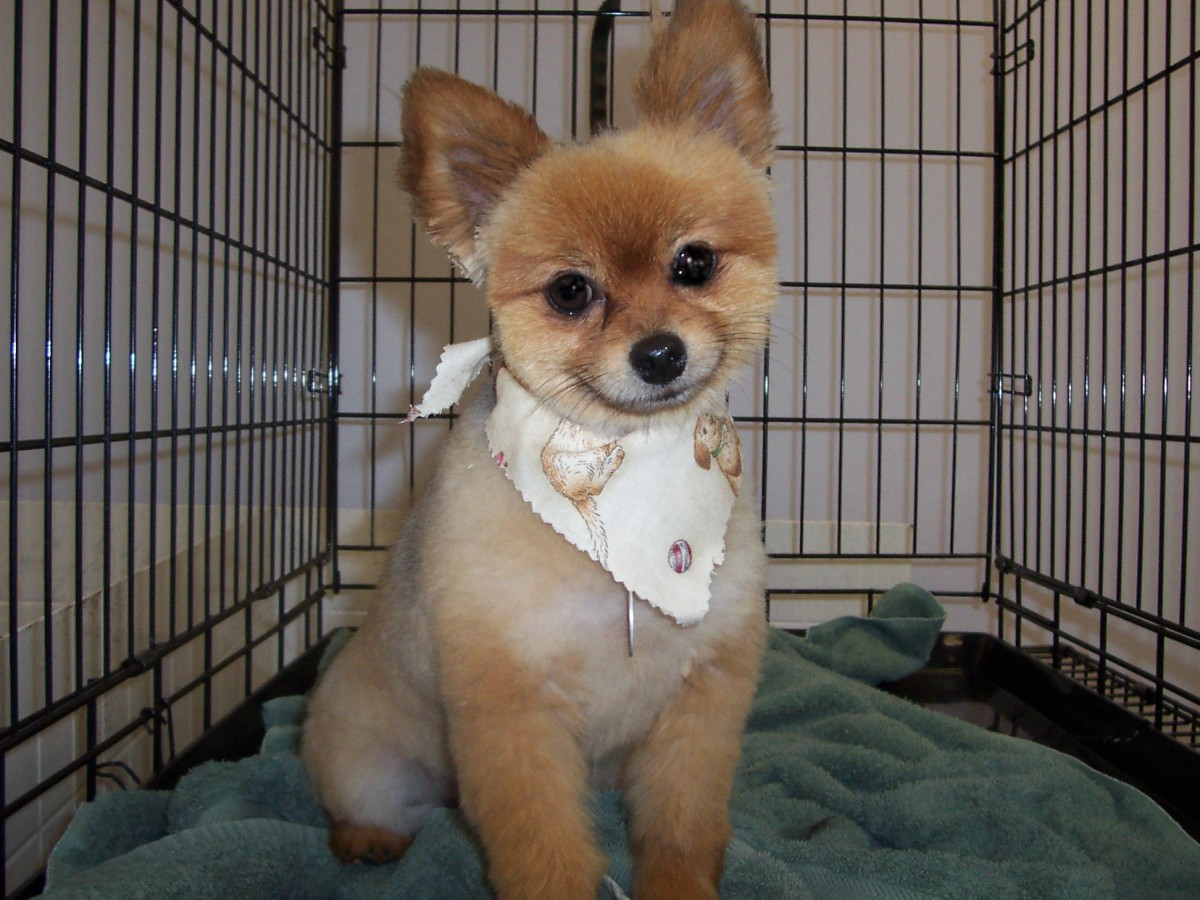 Basics Of Dog Grooming Hubpages