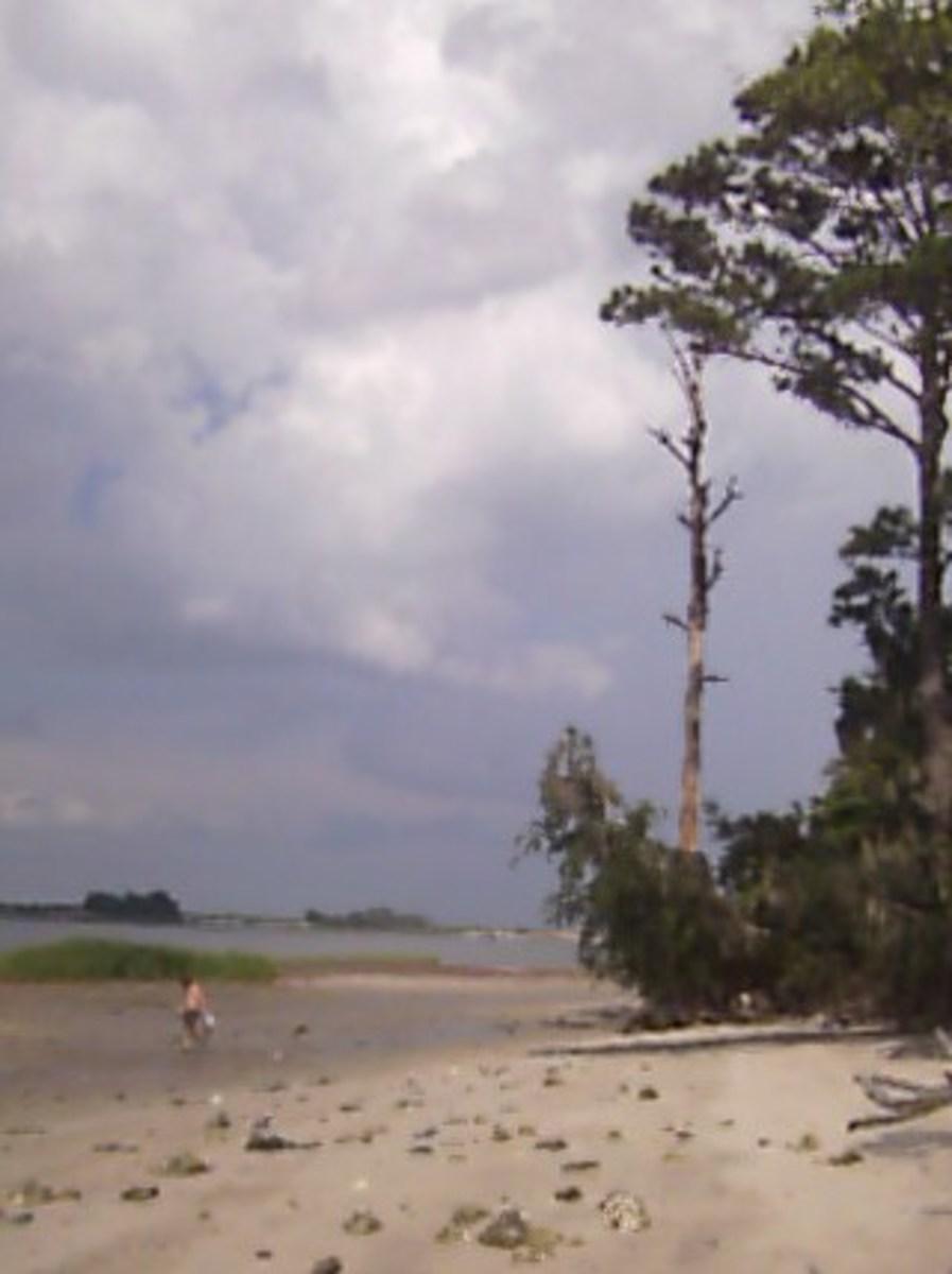 shark-tooth-hunting-on-the-coastal-islands-in-georgia