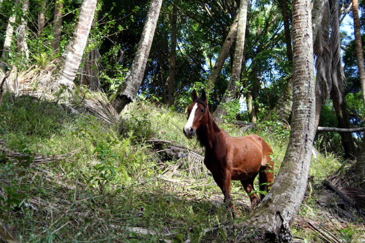 As prey animals, a horse's only defense is to flee to safety