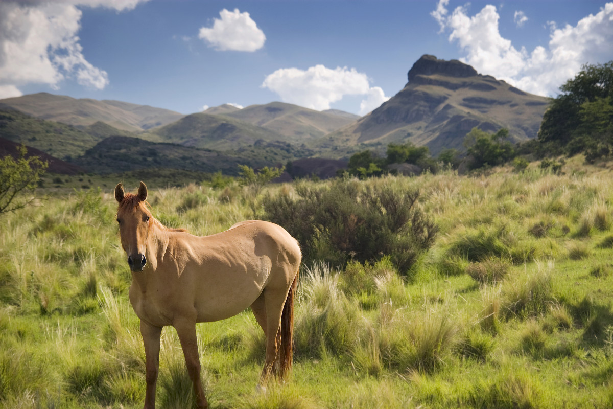 Horse Communication and Their Five Senses