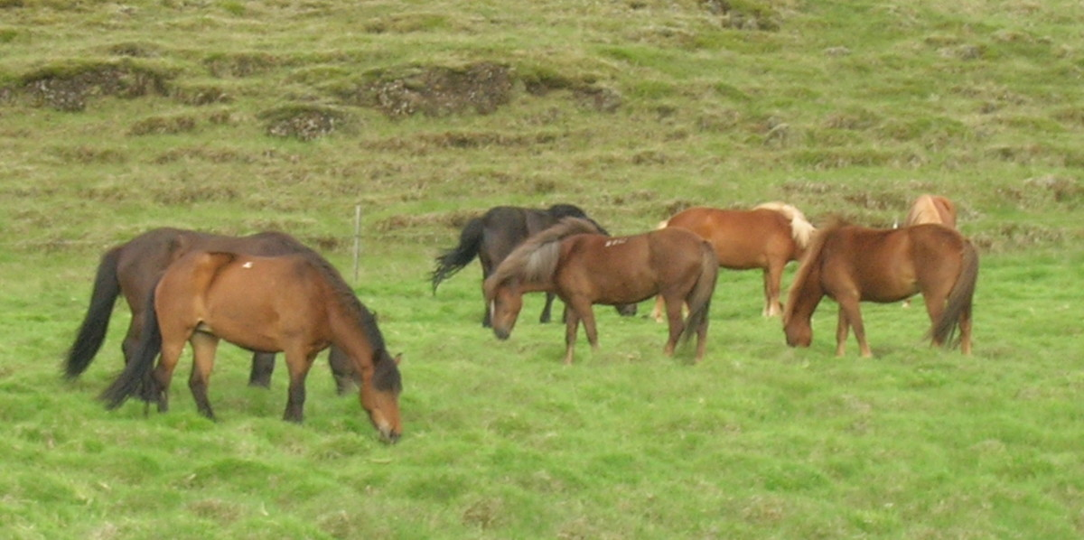 Horses communicate with other horses for safety against predators
