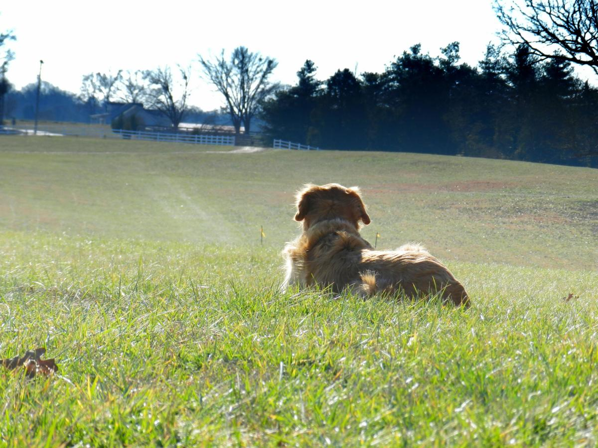 Why is My Dog Territorial at Home? Dog Territorial Aggression Solutions