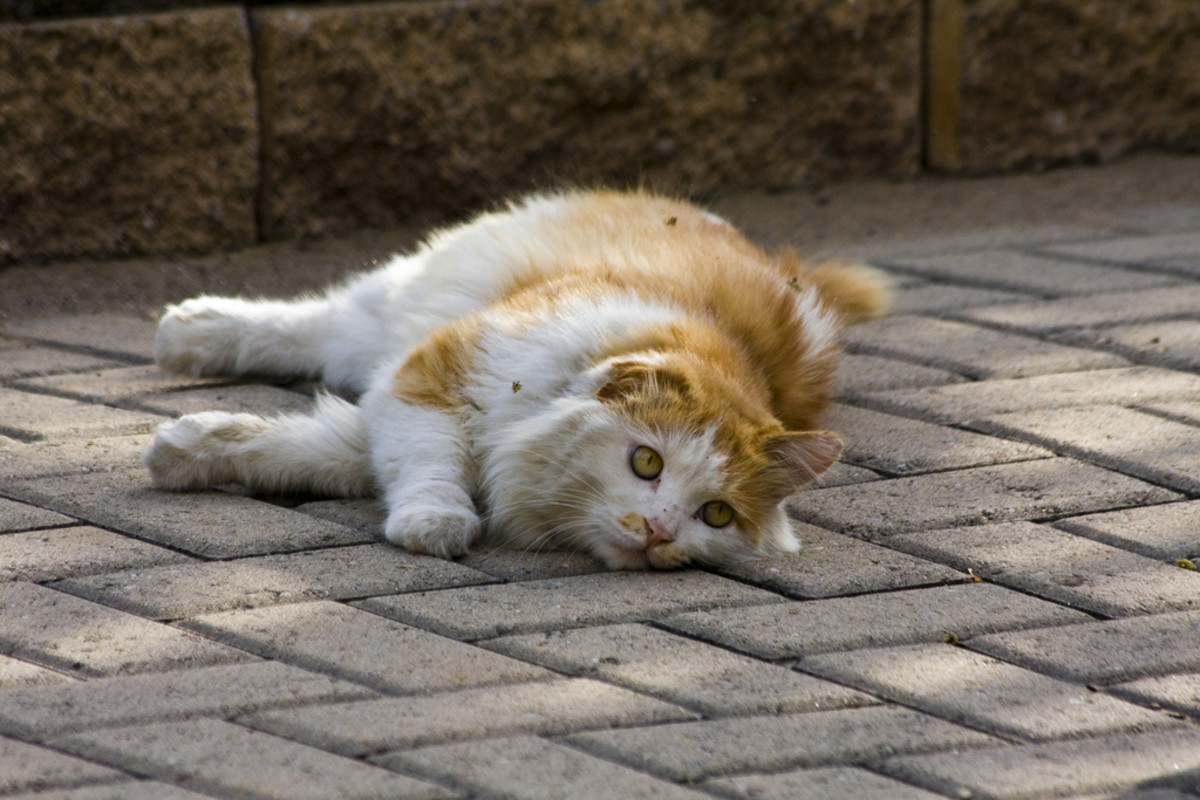 10 Stupid Arguments People Make for Outdoor Cat Roaming