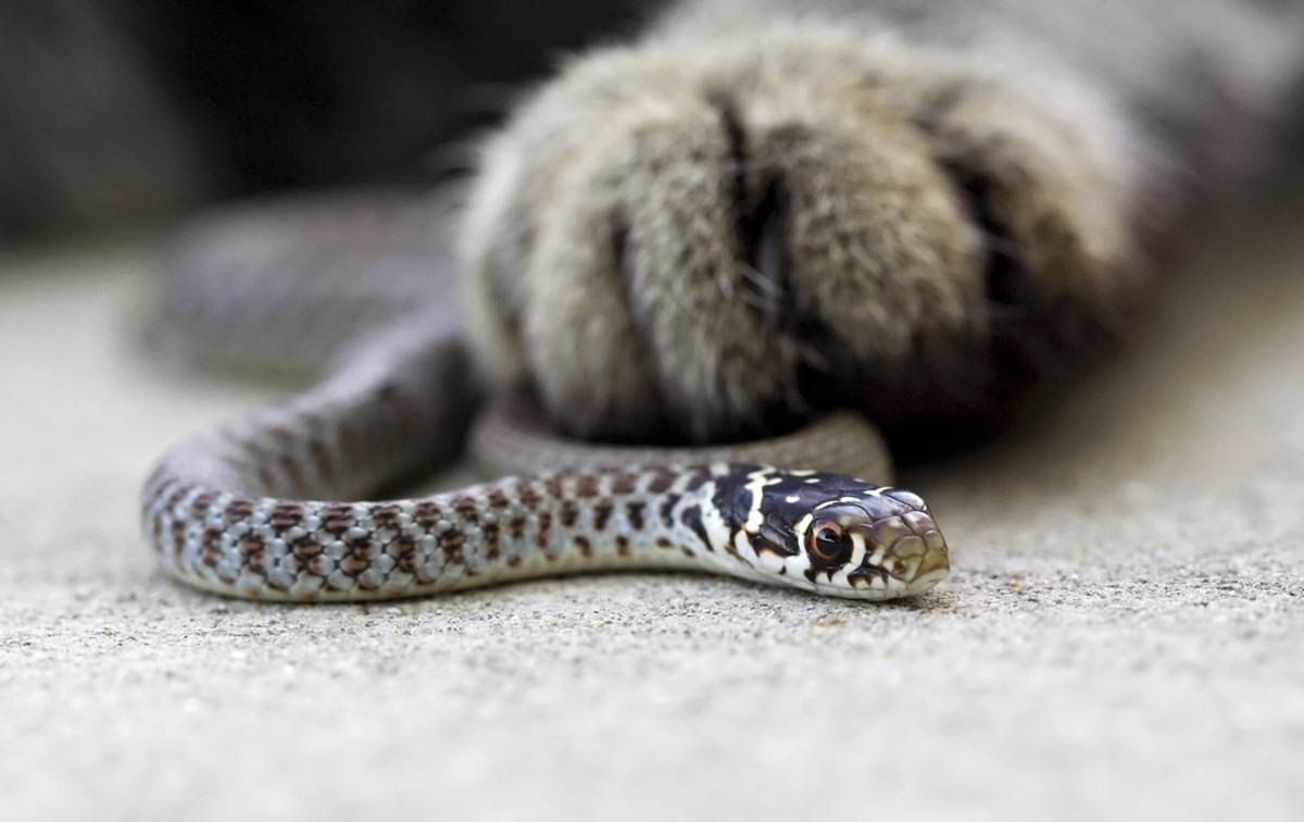 Yes, the snake was killed and the cat whack snapped a photo.