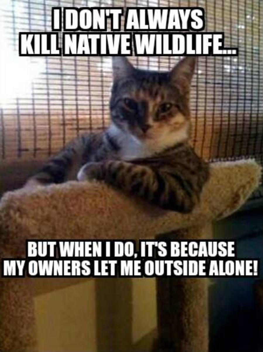 10-stupid-arguments-for-outdoor-cat-roaming