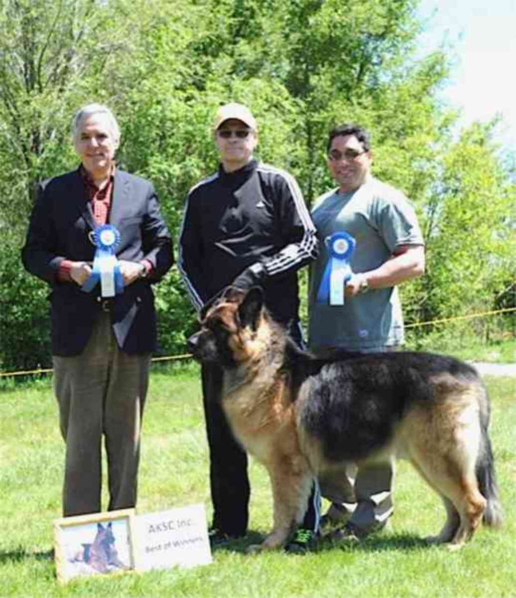 Members from American king Shepherd Club