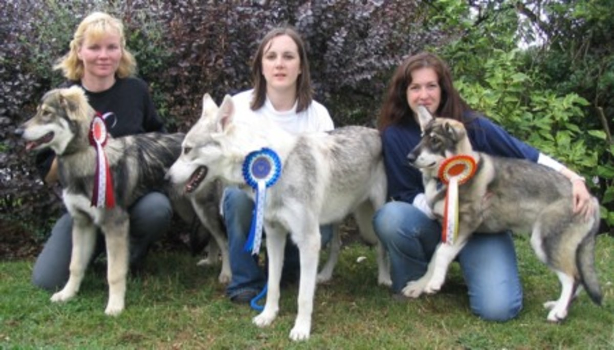 Game of Thrones Northern Inuit Dogs