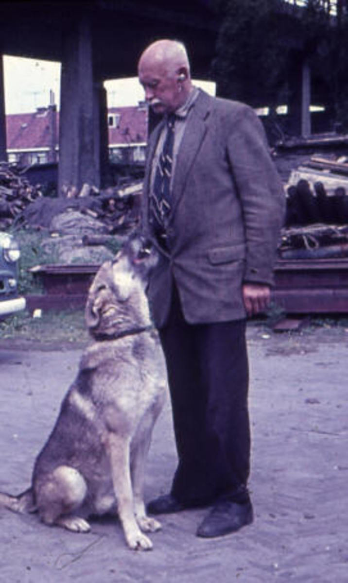 Dutch breeder Leendert Saarloos (1884–1969), Creator of  Saarloose Wolf Dog Breed.