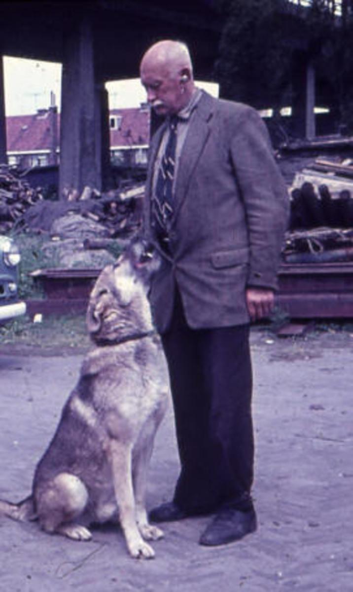 Dutch breeder Leendert Saarloos (1884–1969), Creator of  Saarloose Wolf Dog Breed.