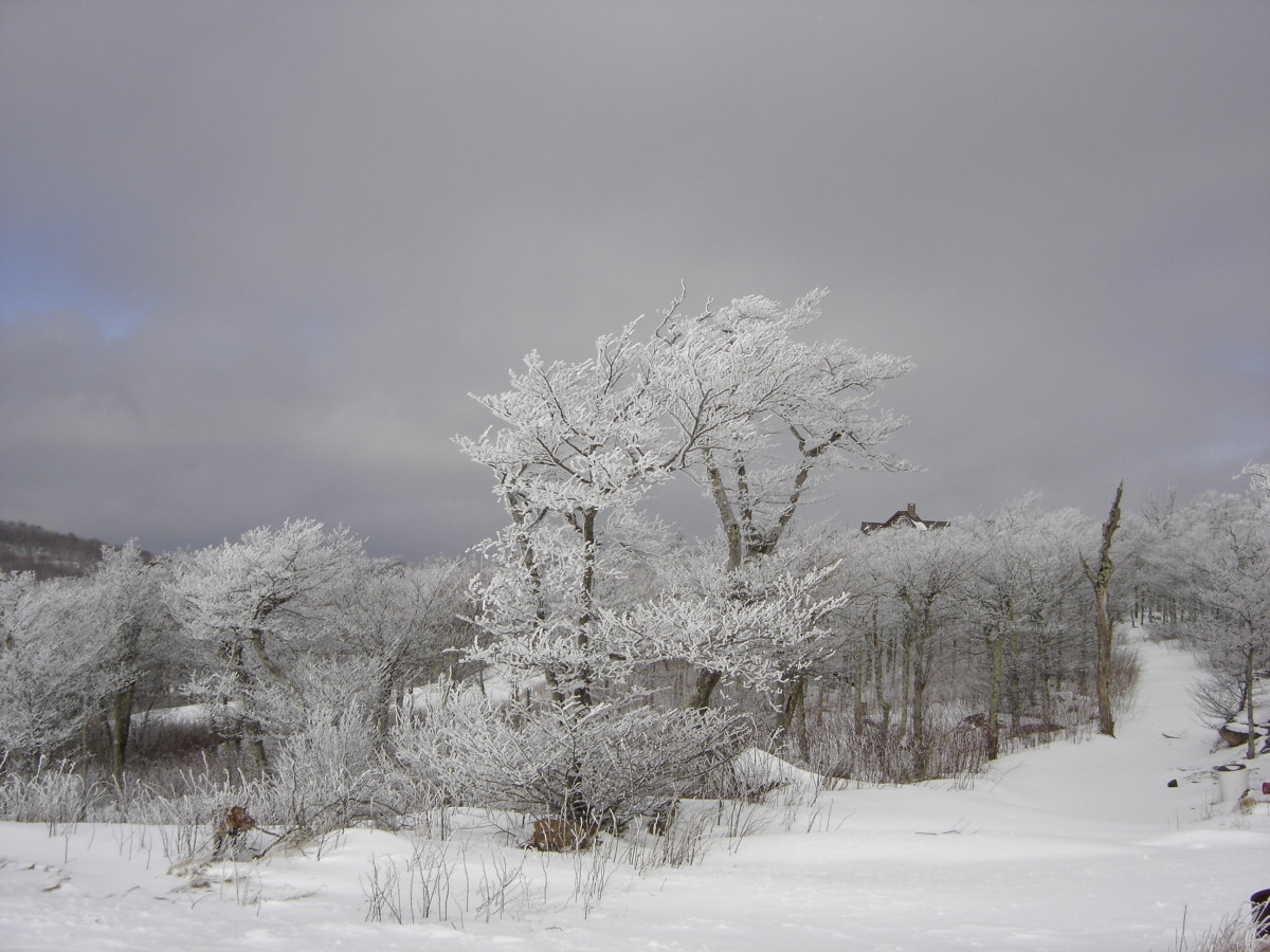 the-color-of-winter