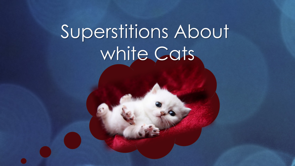 Superstitions about white cats