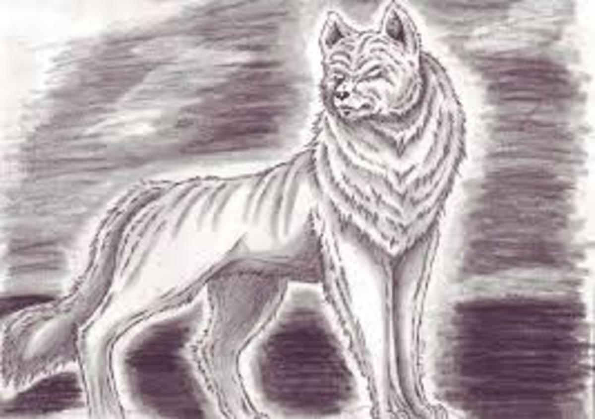 Does a ghost dog haunt the little road in Hall Hollow?