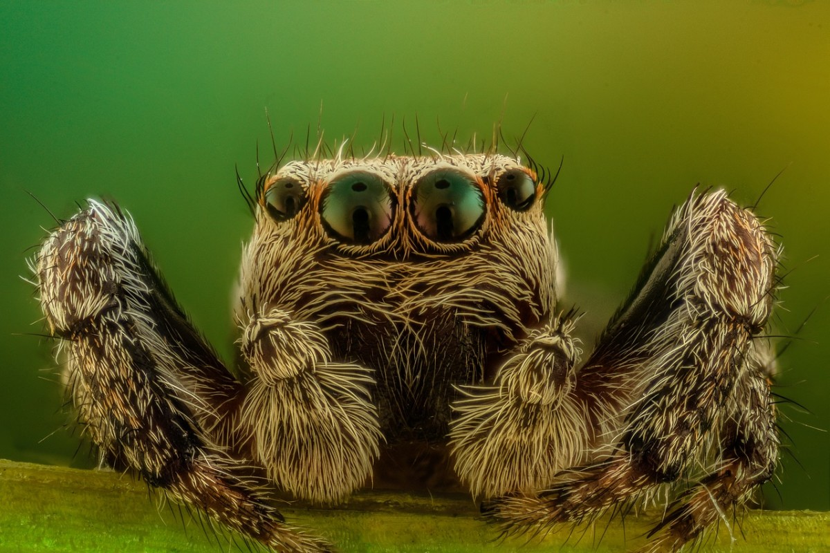 Though not technically insects, spiders have adapted very well to living where humans live.