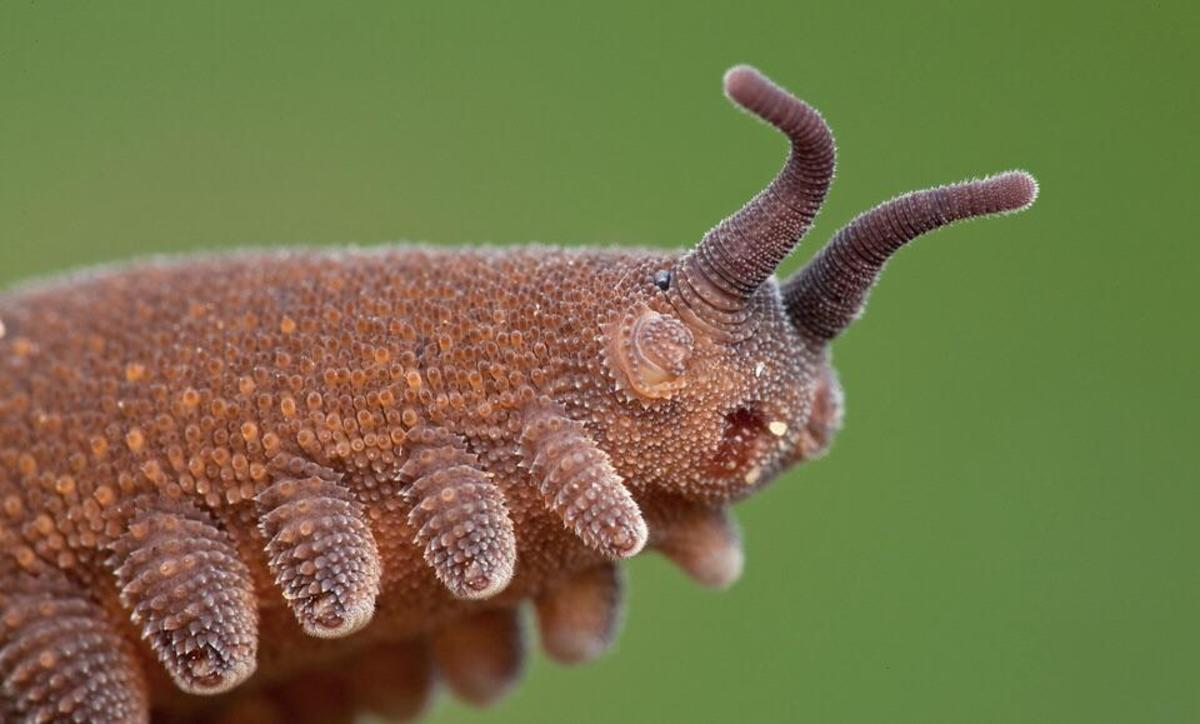 25-most-amazing-and-unusual-animals-on-earth-part-2