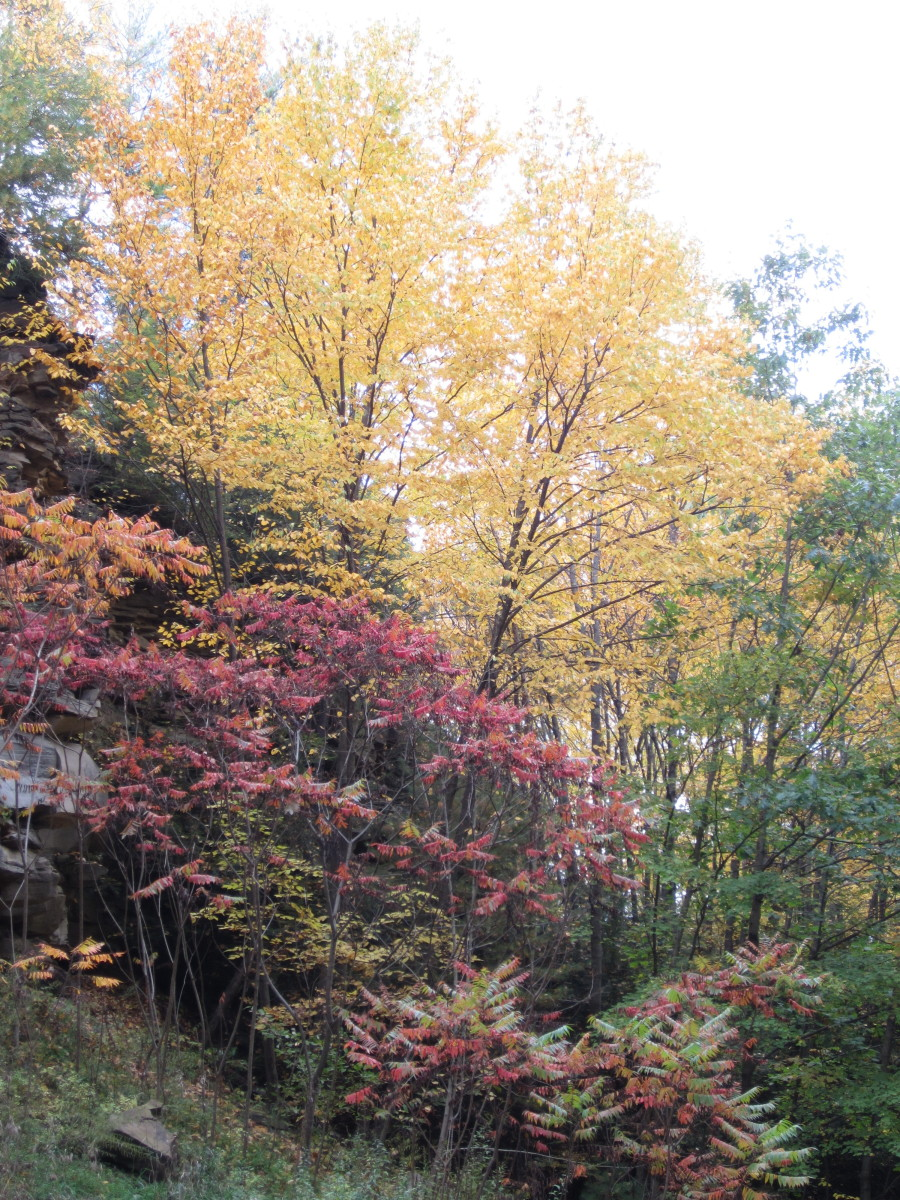 Fall colors along Sandy Creek Trail